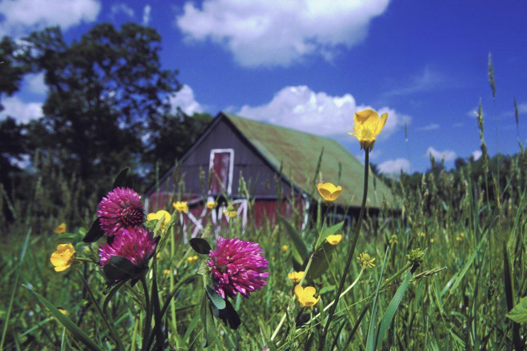 Spring in the NRV