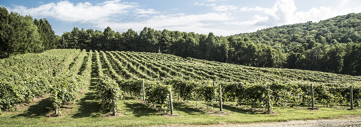 Virginia Living Magazine Recognizes NRV Destinations and Businesses in Best of Virginia 2020 Awards