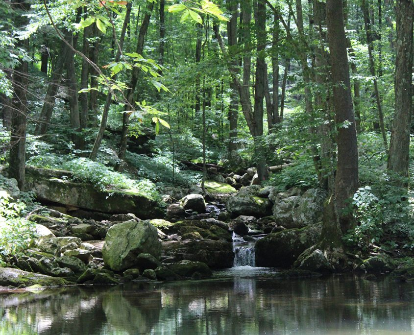 Outdoors in the NRV Jefferson National Forest