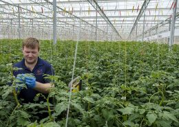 Red Sun Farms #7 Fresh Produce Greenhouse Grower in U.S.